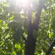 bespaar bomen met de vergaderoplossing van OurMeeting | Blog vergadertips OurMeeting