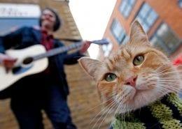 Een kat kan je leven redden